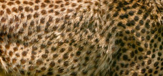 Umělá zvířecí kůže