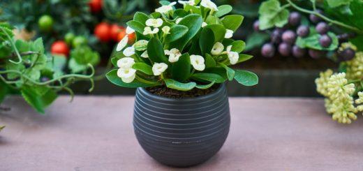 Květiny v domácnosti