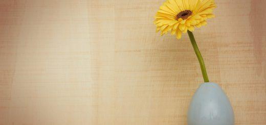 Milujete barvy? Pořiďte si barevné květiny zkrášlující domov