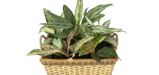 Jak se starat o stínomilné rostliny?