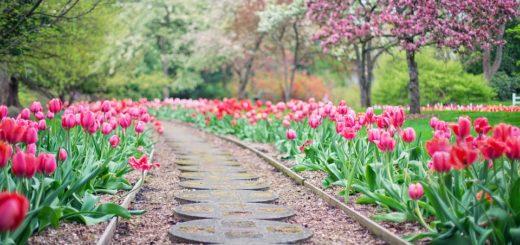 Tipy pro krásnou zahradu