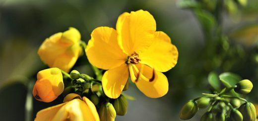 Nejkrásnější květiny do interiéru. Zpestřete i své bydlení
