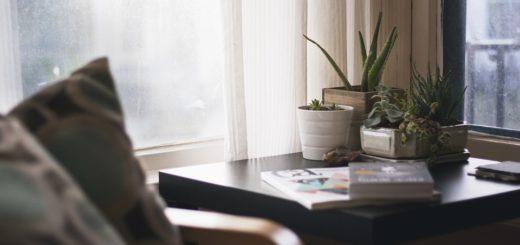 Zpestřete si home office živými rostlinami, budete se cítit skvěle